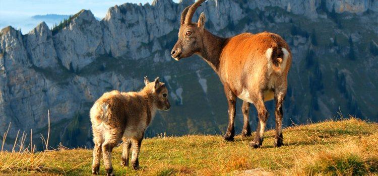 Randonnées Galibier, Parcs Nationaux de la Vanoise et des Écrins