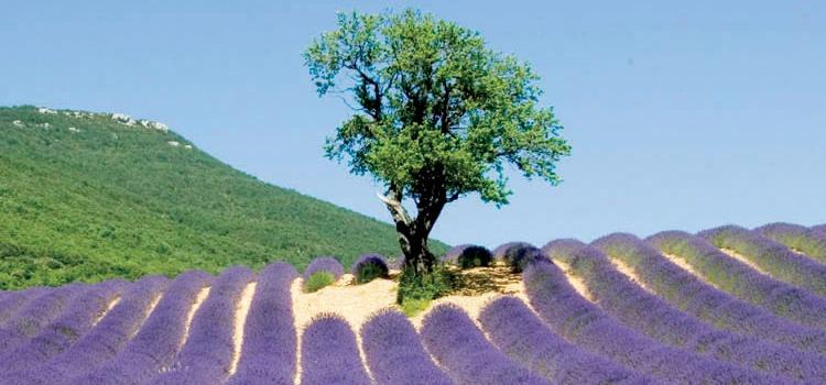 Séjour de printemps en groupe en Drôme Provençale