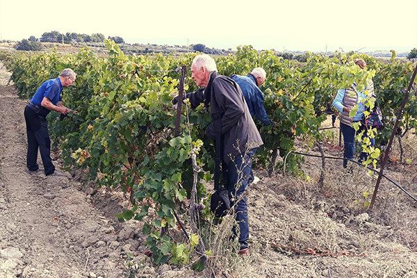 découverte des vignes au village vacance de néaclub à la Drôme provence